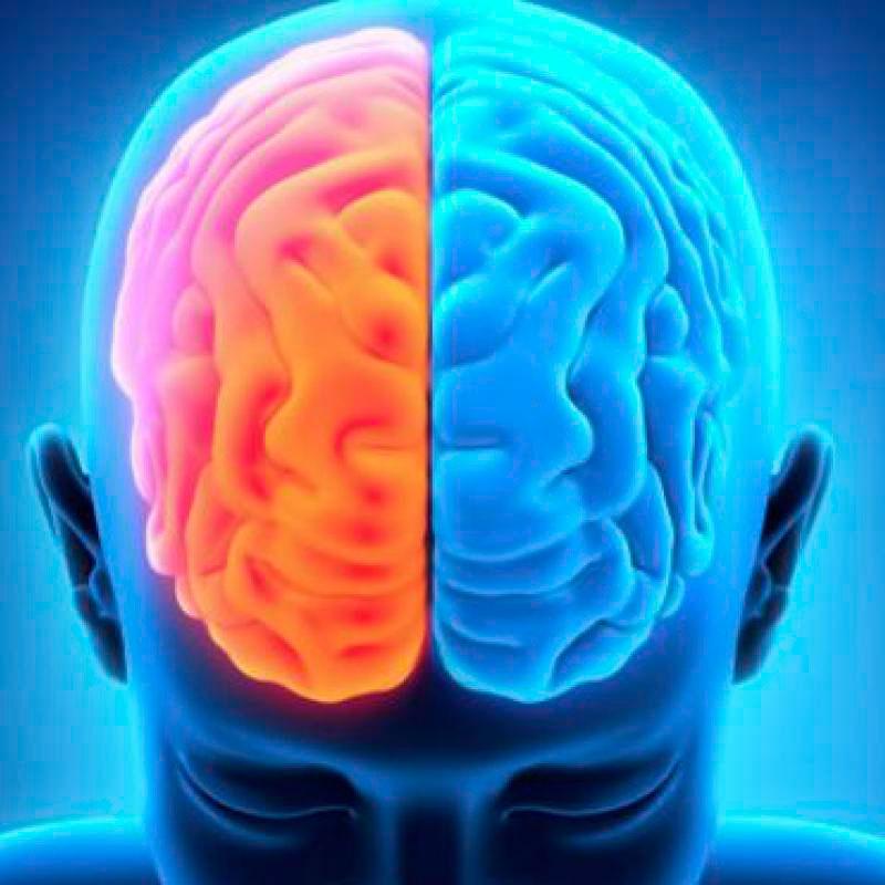 imagen la meditacion puede cambiar el cerebro
