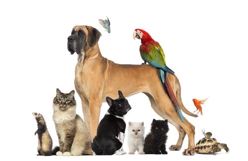 portada de viajar con mascotas