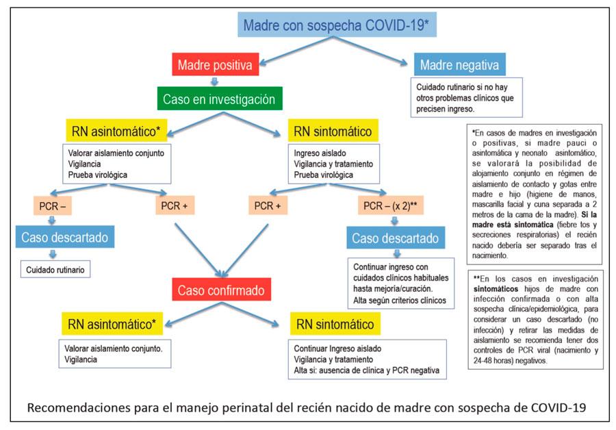 esquema de como actuar en coronavirus en embarazo y lactancia materna