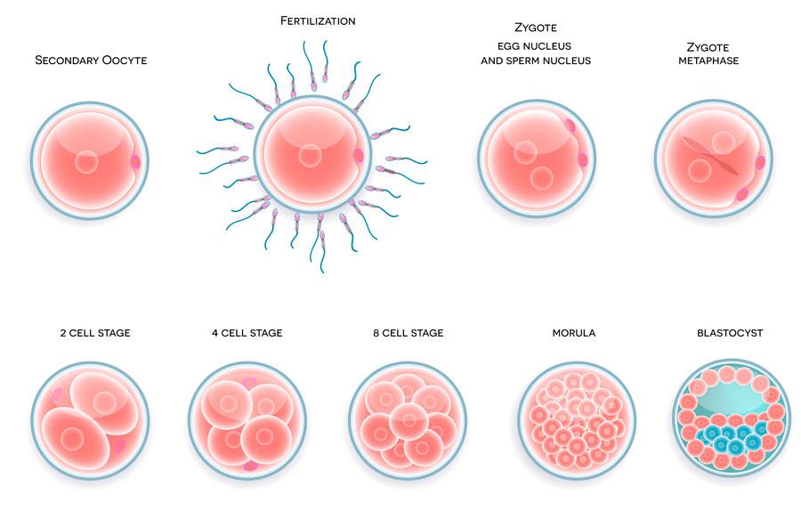 evolución del sangrado de implantación