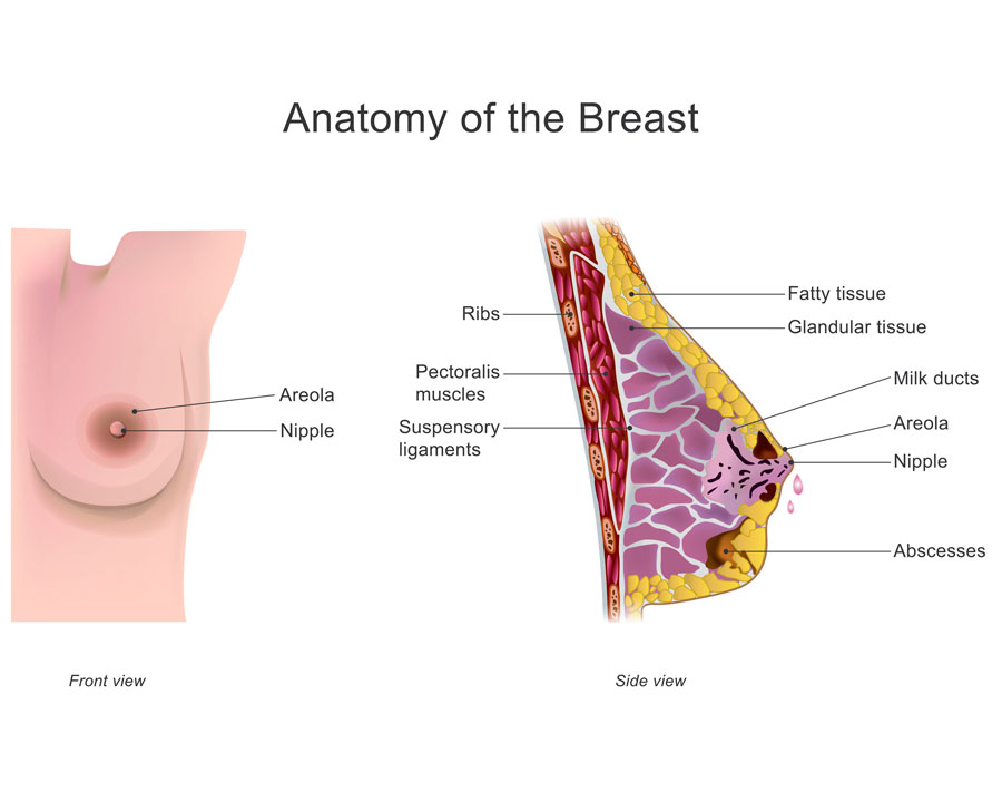 dolor de pechos embarazo o tambien menstruacion